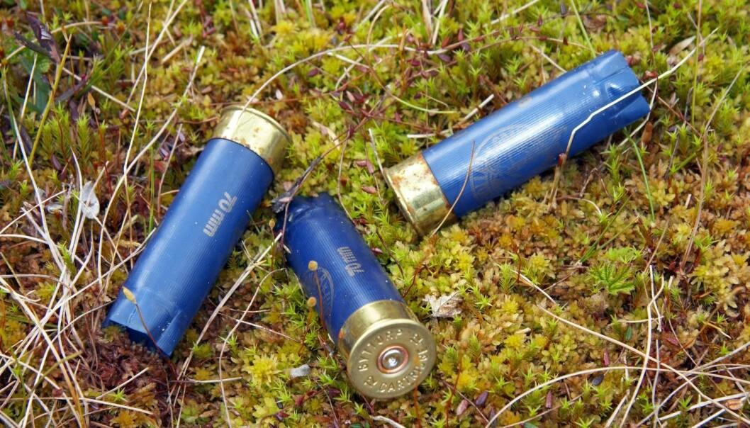 I høst er det igjen lov til å bruk blyhagl, bortsett fra i våtmark. (Foto: Tore Wuttudal, Samfoto, NTB Scanpix)
