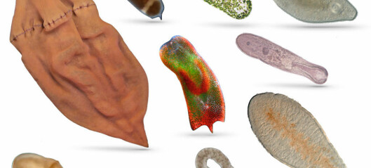The return of the flatworm