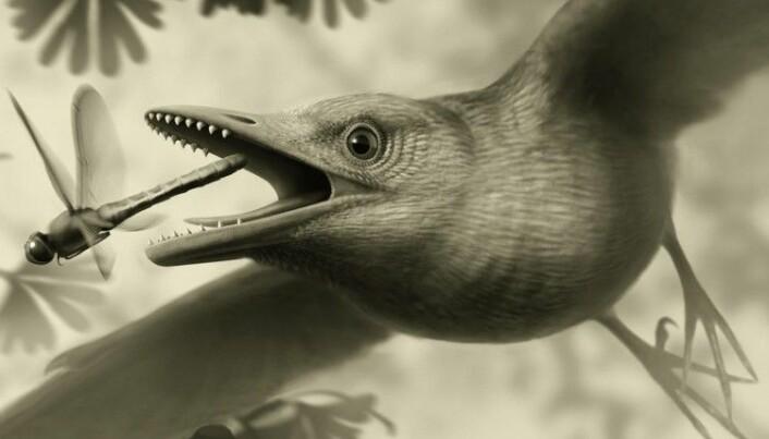 På vingene for 125 millioner år siden