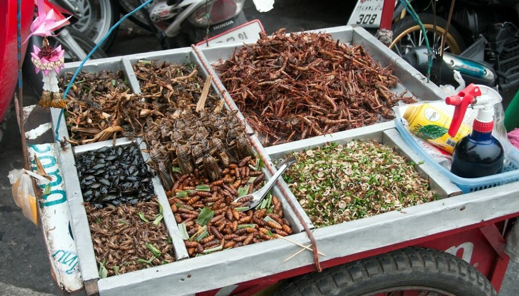 In many Asian and and African countries, insects are an important source of dietary protein. Children don't have any scruples about eating insects, but in Norway, parents are quick to crack down in it. (Photo: Colourbox.)