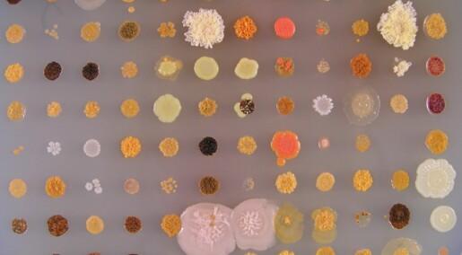 Bakterier fra havet inn i kampen mot kreft og infeksjoner