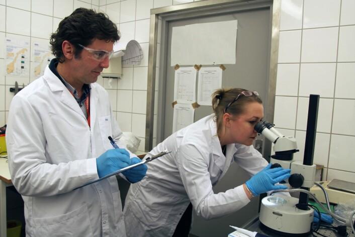 Niva-forskerne Adam Lillicrap og Ailbhe Macken mener dagens risikovurderinger av medisinbruk i havbruksnæringen ikke fanger opp langtidsvirkninger i tilstrekkelig grad. (Foto: Harald Bonaventura Borchgrevink)