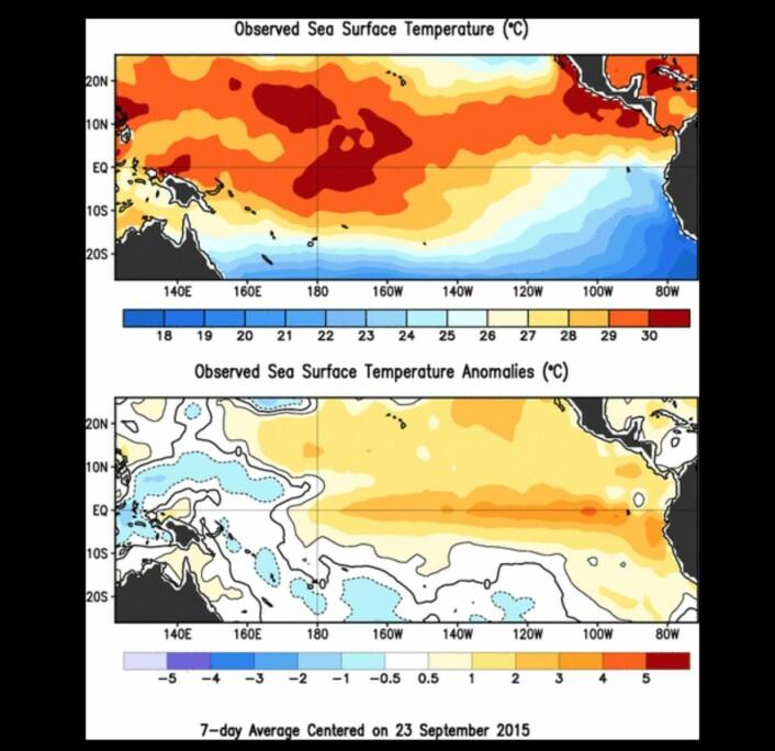 Temperaturen i havoverflaten (øverst) og avviket fra normalen (nederst). (Bilde: NOAA)