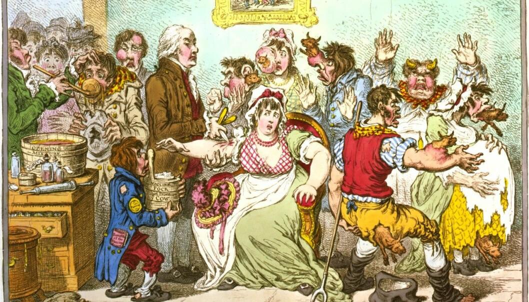 Skepsisen mot vaksiner er like gammel som vaksinen selv. Da vaksinen mot kopper kom snakket folk om at man kunne utvikle ku-lignende trekk av vaksinen som inneholdt kukopper. Den britiske satirikeren James Gillray dro det enda lenger i denne tegningen fra 1802. (Foto: James Gillray/Library of Congress, Prints & Photographs Division/Wikimedia Commons)