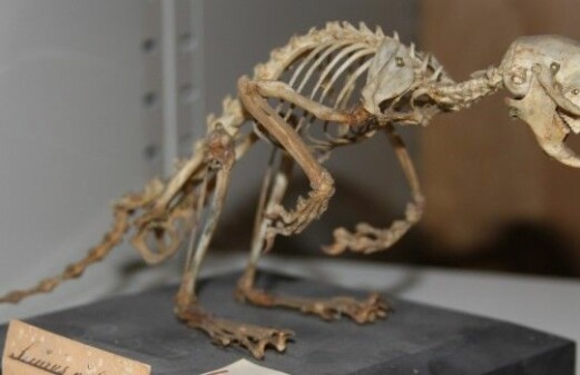 Forgotten museum specimens shed new light on animal history