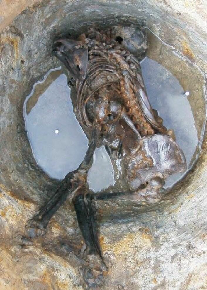 En av de andre mumiene som ble undersøkt i forskningsprosjektet. (Foto: Cambridge Archeological Unit)