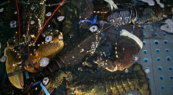 Forskere og fiskere vil ha hummerfiskerregister