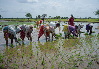 Project aims to help Indian farmers cope with extreme weather