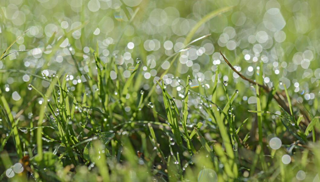 To understand the weather, you have to understand raindrops. (Illustrative photo: Colourbox.)