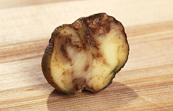 The potato disease that changed the world