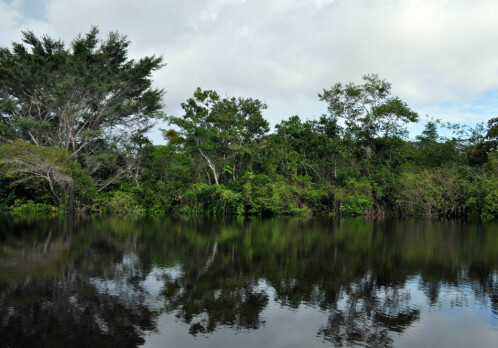 Keeping an eye on tropical forests