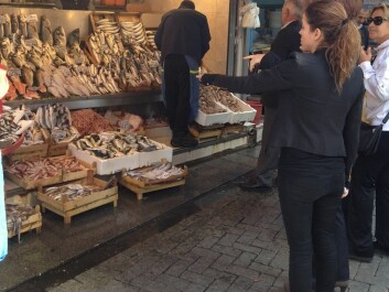 Gülin Kan from Innovasjon Norge og scientist Ingrid Kvalvik from Nofima inspecting a fishmonger in Turkey. (Photo: Gøril Voldnes/Nofima)