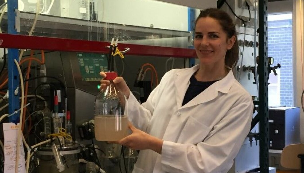 Monica Conthe is growing greenhouse gas consuming bacteria. (Photo: NORA)