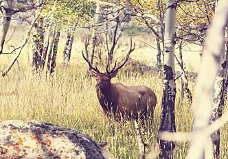 Don't blame the deer for ticks
