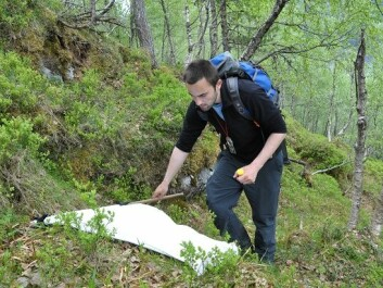 """In the TickDeer-project the researchers have looked at the populations of deer and counted the ticks on the animals and in the landscape by so called """"flagging"""". (Photo: Atle Mysterud)"""
