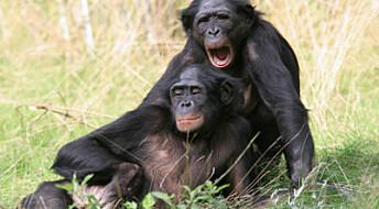 Aper smittes også av et gjesp