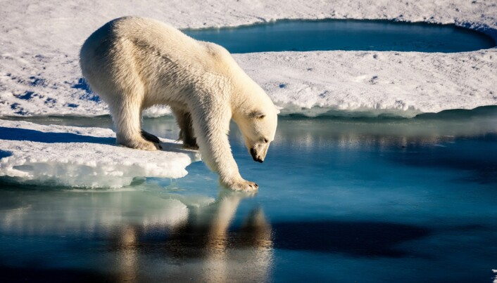 When will the Arctic be ice free?
