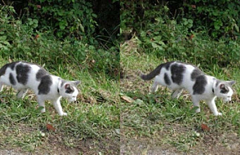Can you spot the difference between these cats?