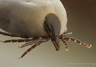 Warmer climate enables ticks to survive in the high mountains