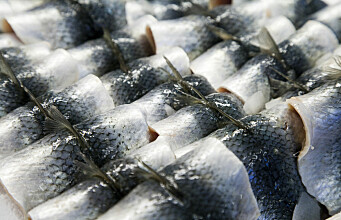 Coffee and potatoes point the way for herring