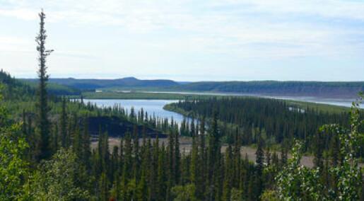 Roper varsku for kanadisk villmark