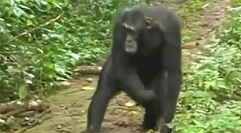 Pedagogiske aper
