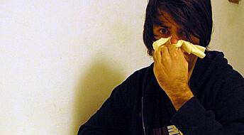 Svineinfluensa vanligst flere steder