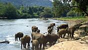 Store dyr viktige for tropiske planter
