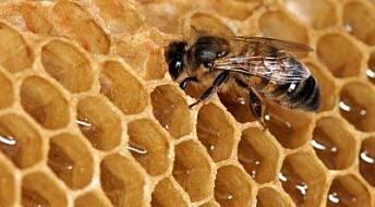 Honning fungerer på sår