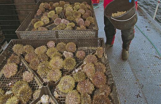 Will not fish underused species