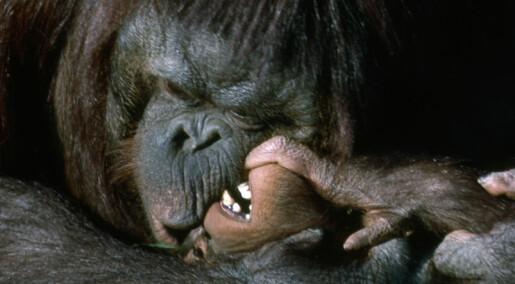 Utadvendte gorillaer lever lengre