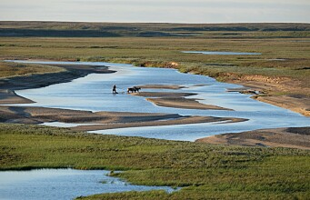 Looking for answers from indigenous peoples on the tundra