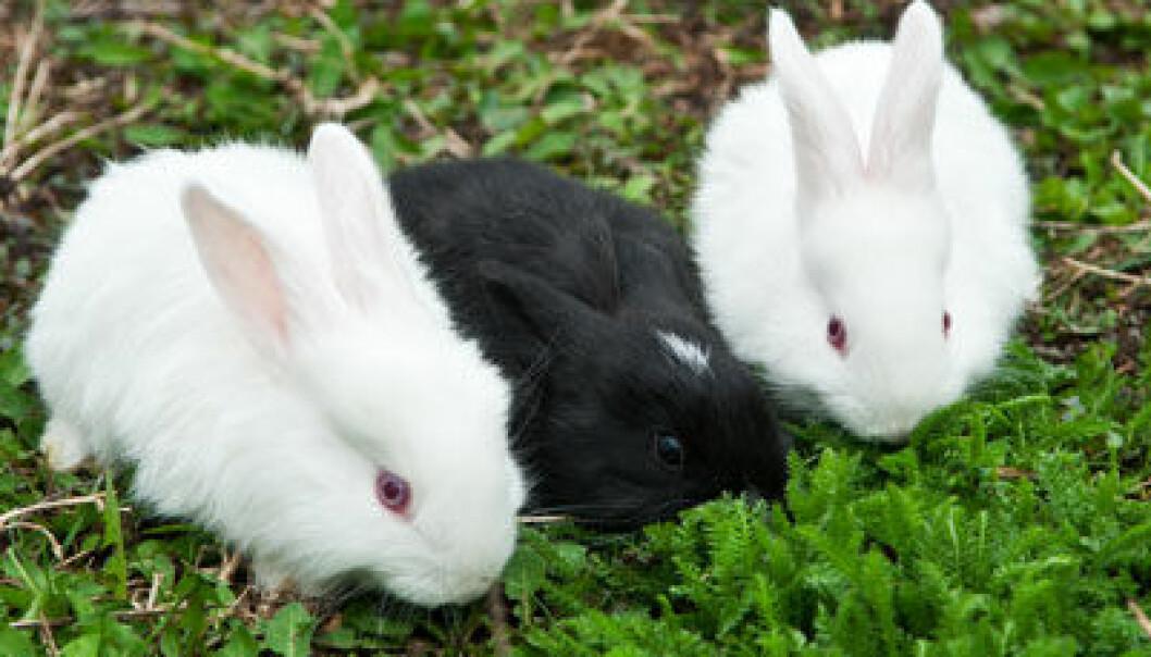 Inne-kaniner mangler D-vitamin