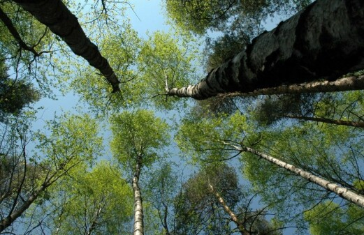 Forests play important part in cooling down local climate