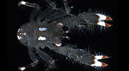 Oppdagelse av ny skalldyrslekt og fem nye arter