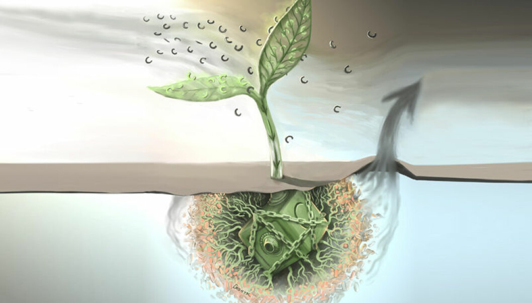 Planter fanger karbon i karbondioksid i fotosyntesen, og lagrer den i jorda. Nå har forskere funnet ut at mer karbondioksid i lufta også stimulerer bakterier i jorda til å produsere mer karbondioksid. (Illustrasjon: Victor O. Leshyk/Science)