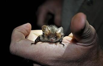 Technology revealing the secret life of bats