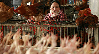 Advarer mot ny type fugleinfluensa