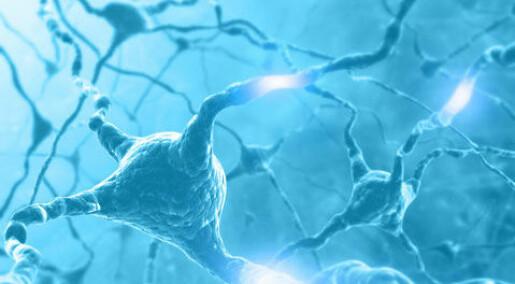 Stress ga flere hjerneceller