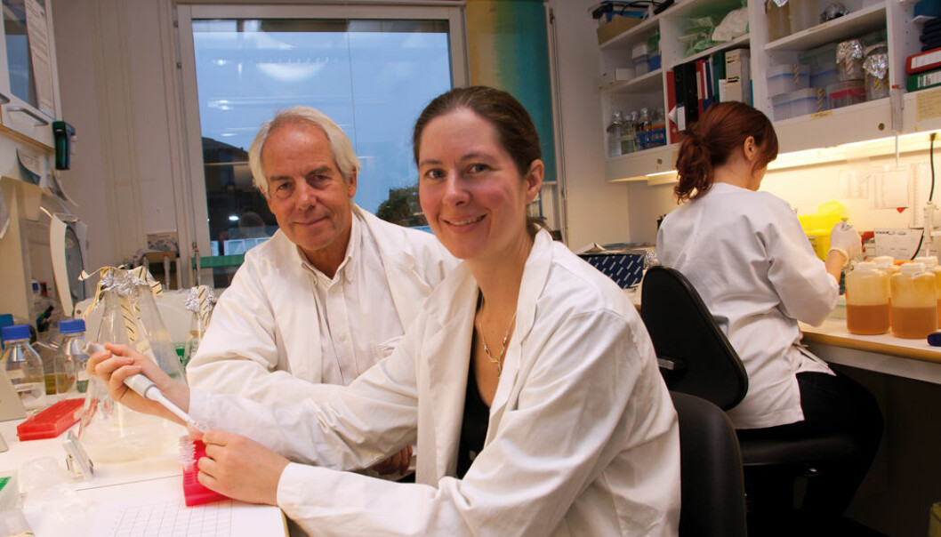 """""""The new invention Vaccibody can also be used to make vaccines against flu,"""" say PhD student Gunnveig Grødeland and Professor Bjarne Bogen. (Photo: Yngve Vogt)"""