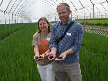 Sintef researchers Maria Kollberg Thomassen and Markus Steen at the Skjærgaarden nursery. (Photo: Lisbet Jære)