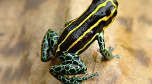 Frosker med feil farge blir frokost