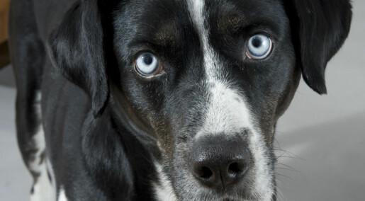 Terapi stresser ikke hunder