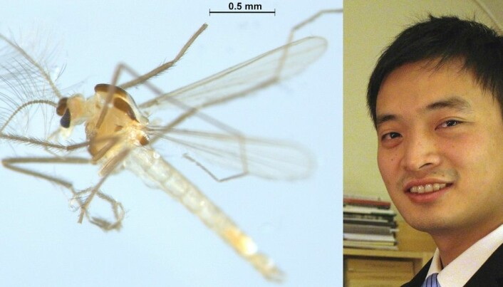 Fly hunter has discovered 30 new species