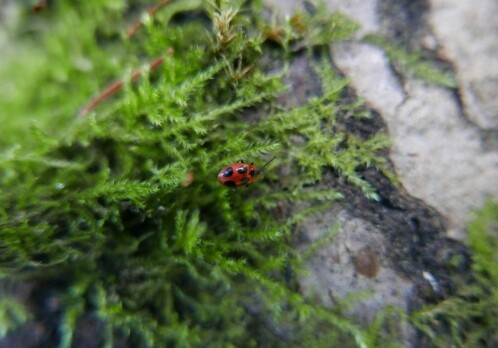 Clever fungi catch a ride with beetles