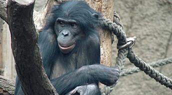 Bonobogenomet kartlagt