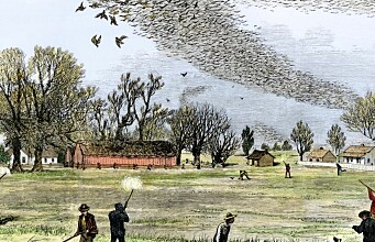 Why the passenger pigeon died out