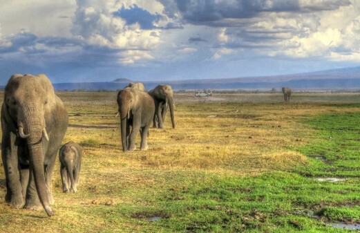 Elephants outside the national park are more stressed