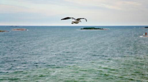 Advarer mot kunstig åndedrett for Østersjøen