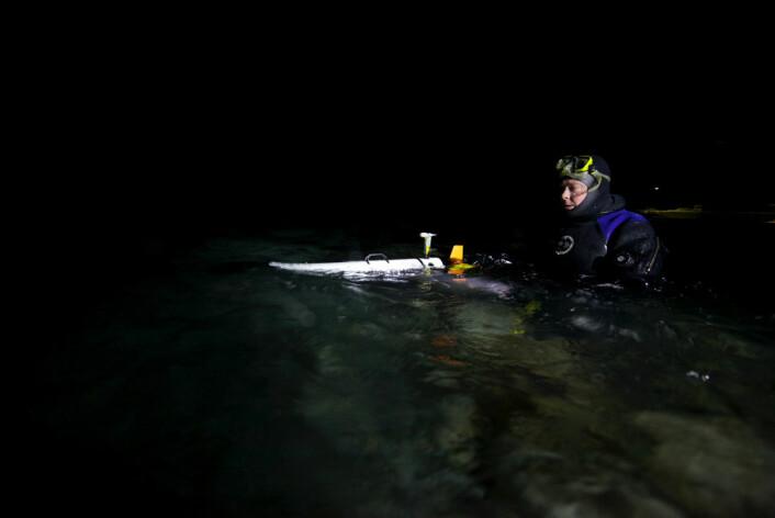 Professor Jørgen Berge dykker rett under havoverflata med undervannskamera. (Foto: Geir Johnsen, NTNU)